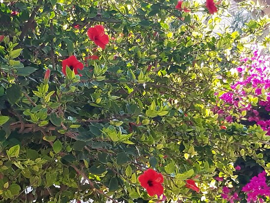 Kokkini Hani, Grecia: ✌✌Lovely flowers!.✌✌ (the summer of 2021)