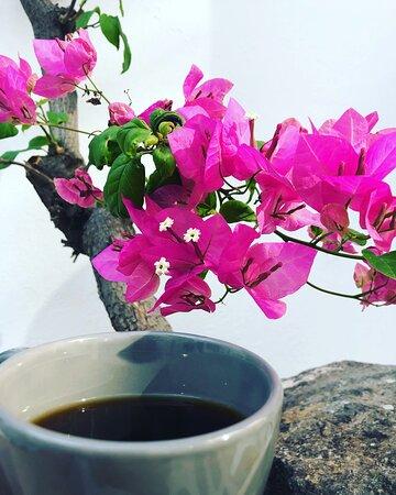 #coffee #bougainvillea #takisguests #takisexperience #naxos #cyclades #greece
