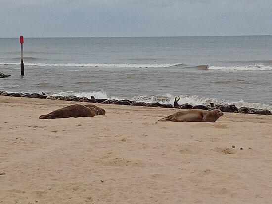 Horsey Beach seals!