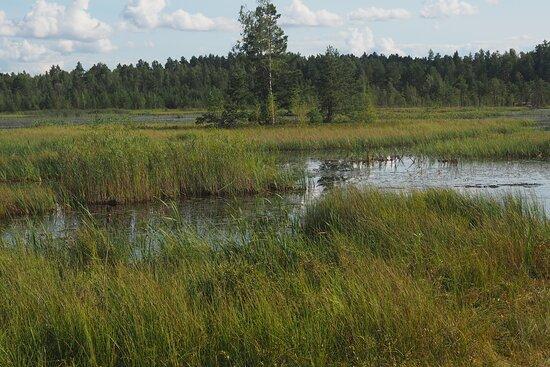 Kaluga Oblast, Russia: галкинское болото