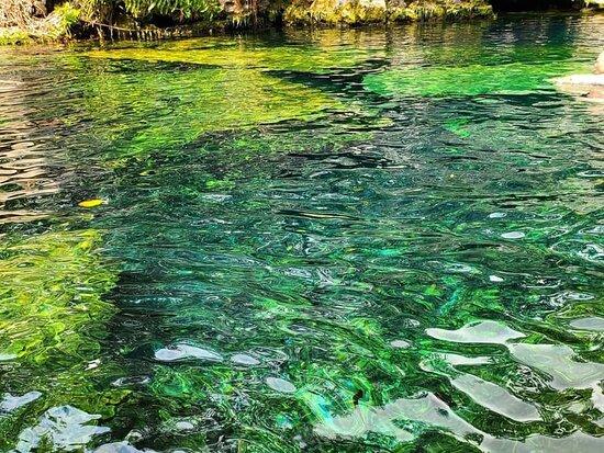 Conoce de cerca el increíble Cenote cristalino, rodeado de naturaleza. Vive un día en familia o amigos, una experiencia que necesitas vivir en conexión con la madre naturaleza, te damos más información sobre este servicio.