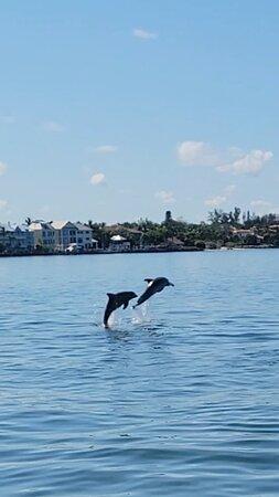 So many Dolphins today