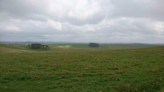 牧場の風景。ところどころに牛が集まって草を食む