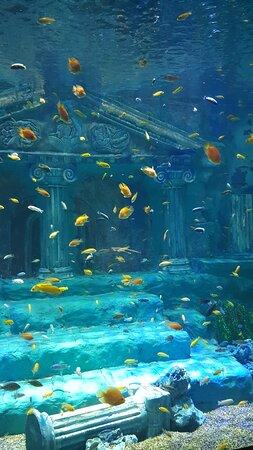 Deniz dünyasından görünümler