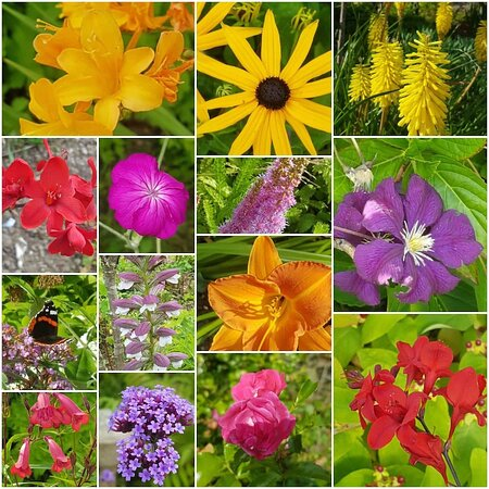 A selection of plants in flower 28th August.