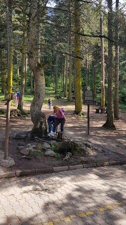 Gölcük Tabiat Parkı