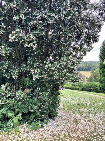 1.  Scotney Castle Garden, Scotney Castle, Lamberhurst, Kent
