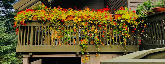 Beautiful flowers and landscaping at Hidden Creek B&B