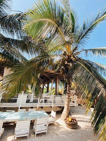 🌴 Descansa bajo una palmera, siente el torrente del mar.