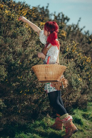 Vix foraging the hedgerow.