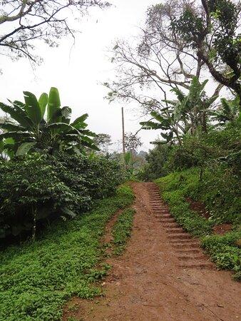 Materuni Waterfall Trail