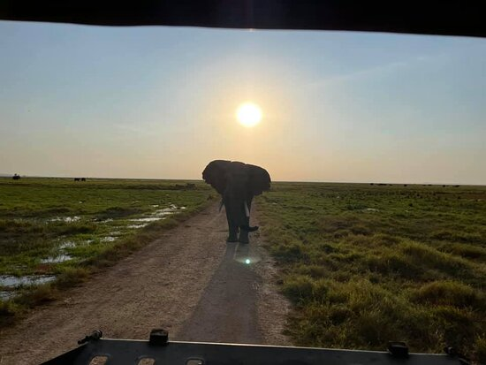 Incredible photo of an elephant at sunset.  Taken at Amboseli.