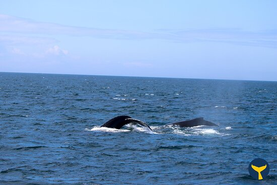 Half-Day Whale Watching Adventure from Victoria: Photo was taken on August 27, 2020. Complimentary photo from our tour provided by Prince of Whales.
