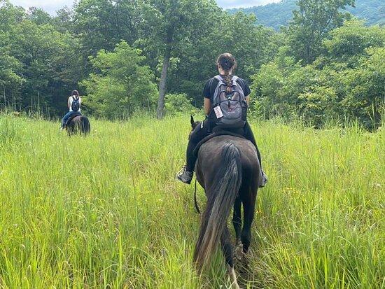 Let's Ride Horses, LLC