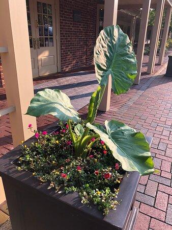 Garden bed next to lobby entrance