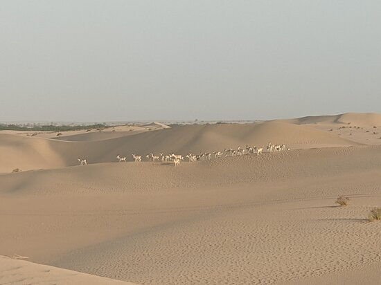 Sunrise Desert Safari with Picnic Breakfast from Dubai: Pictures of wildlife and breakfast in the nature preserve.