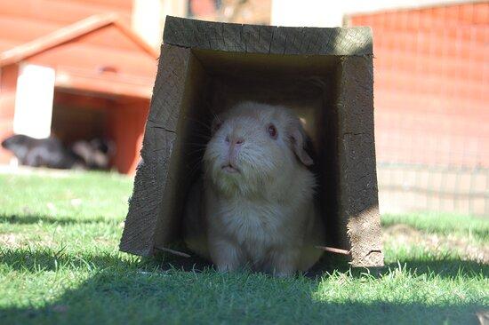 Caramel enjoying a shady spot