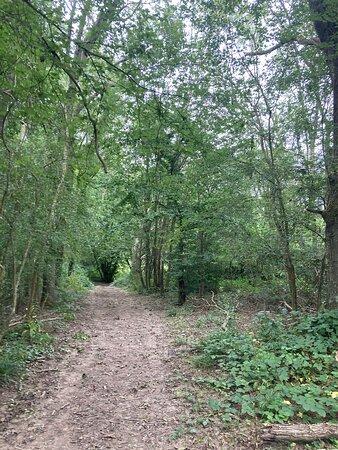 10.  Comfort's Wood, Cranbrook, Kent