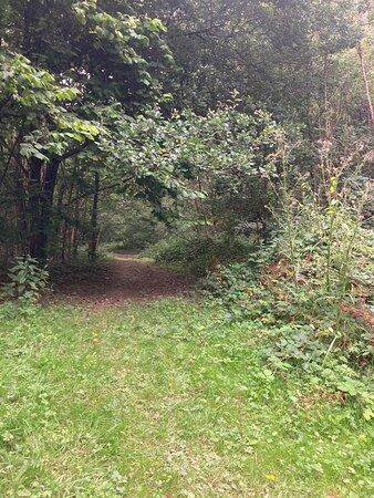 11.  Comfort's Wood, Cranbrook, Kent
