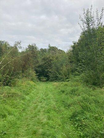 12.  Comfort's Wood, Cranbrook, Kent