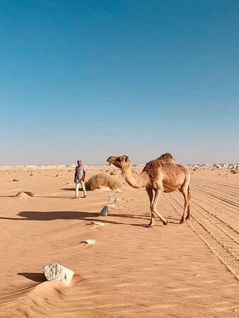 White desert and Bahriya Oasis safari and camping tours woth jeep