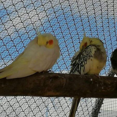 La Taniere - Zoo Refuge
