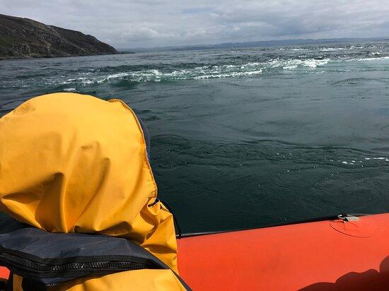 穿越科里弗雷坎灣的海洋野生動物之旅張圖片