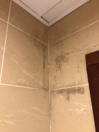 Mould on the walls