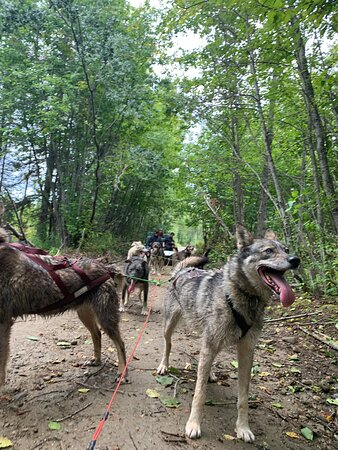 Sled Dog Mushing and Kennel Tour - 2 Hours: Photos