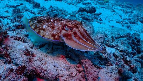 Racha Noi & Racha Yai 3 dykk (certificerede dykkere) - Phuket Dive Tours: wonderful sealife