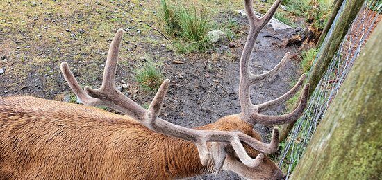 Red deer range.