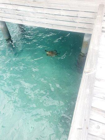 turtle nearwater villa around 3:00 p.m.:)