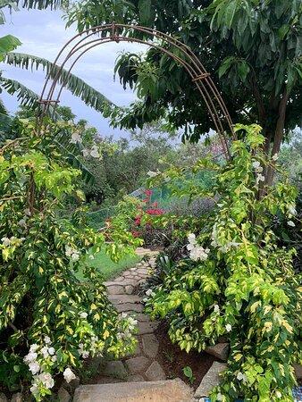Take a walk through our meandering hillside gardens to enjoy local flora...