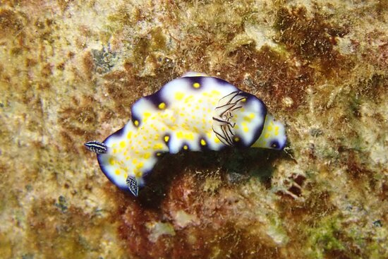 There are thousands of different kinds of nudi's…