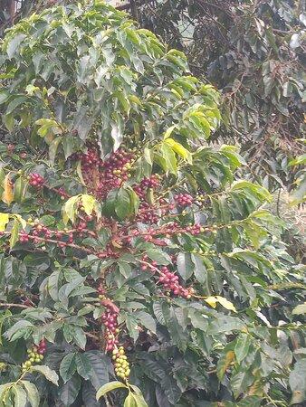 Jardin, Colombia: La cosecha ensu maxima expresion