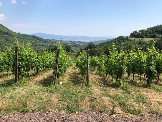 Roccatederighi, Italia: vigna