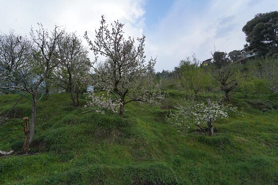 Orchard view surrounding hotel.
