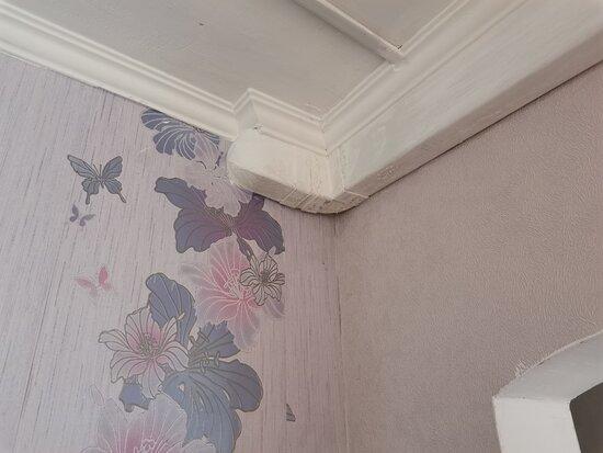 плесень даже на потолке