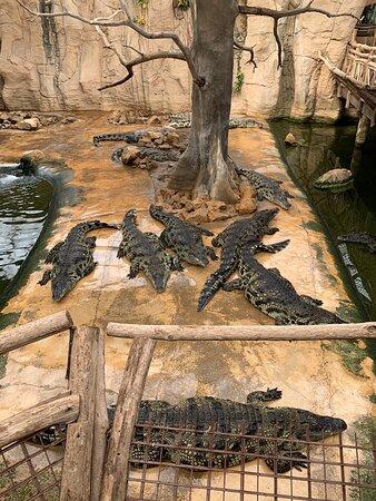 Tortue serpent et alligator