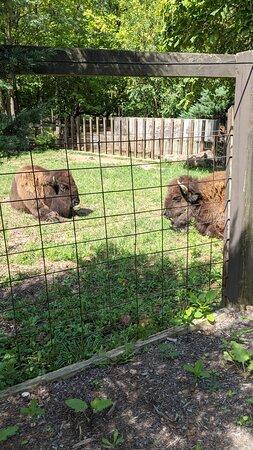Elmwood park zoo 6