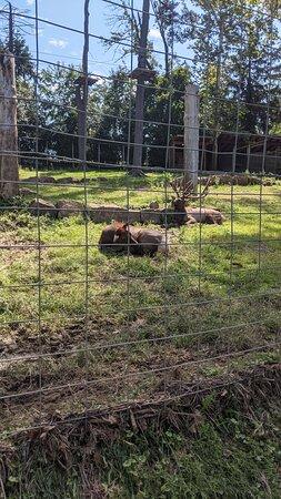 Elmwood park zoo 7