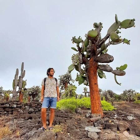 Opuntia forest, Tortuga Bay