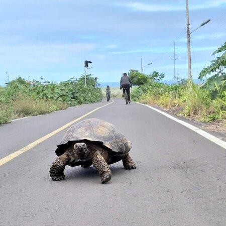 Cycle lane, Puerto Ayora