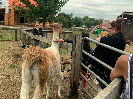 Animal feed areas @dutch village