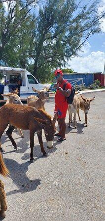 Turks-och Caicos: Chillin with the Homies 🤣🤣