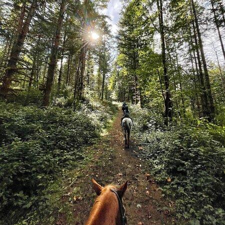 Equine Escapes