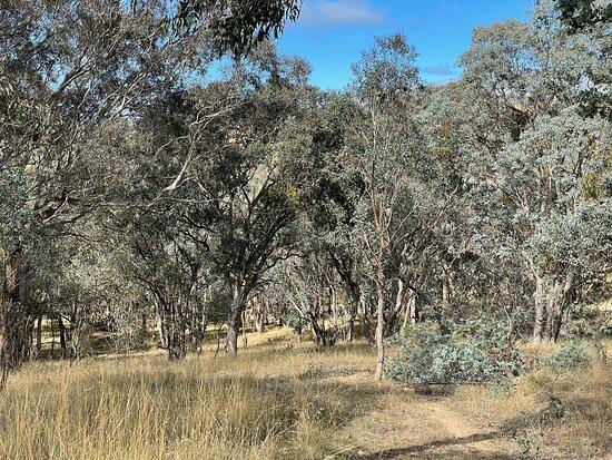 McKenzie Flora Reserve