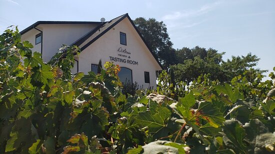 Plymouth, Californie: Our Tasting room through the Barbera