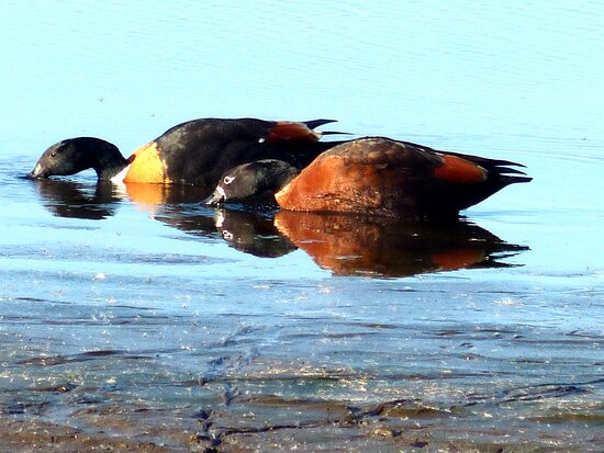 Lake Gwelup Reserve