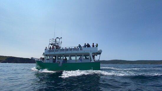 Atlantic puffin Vessel